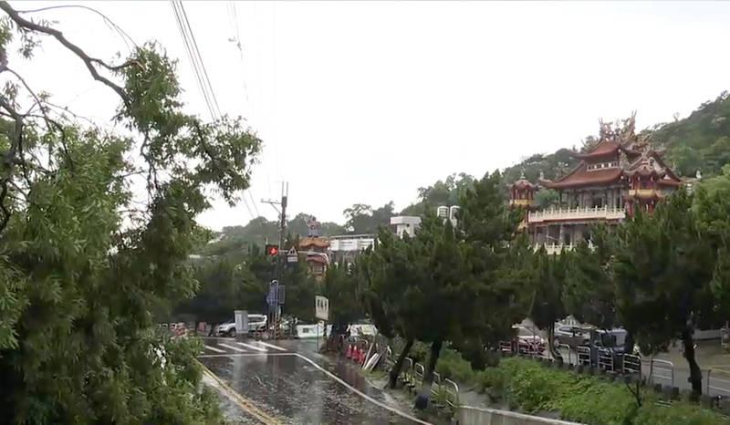 員林明湖路發生樹木倒塌,幸好未有人員傷亡,民眾認為是對面廟宇神明保佑一切化險為夷。(記者陳冠備翻攝)