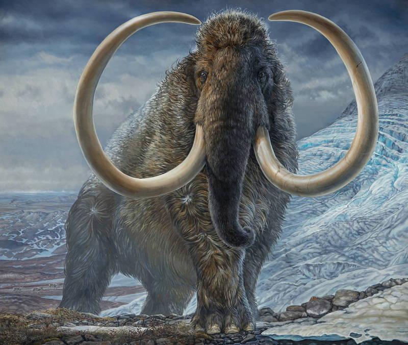 1萬7100年前生活在阿拉斯加北極地區的成年長毛象想像圖。(路透)