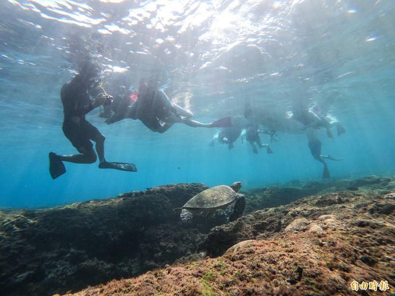 到小琉球浮潛,大多能近距離目擊海龜。(記者陳彥廷攝)