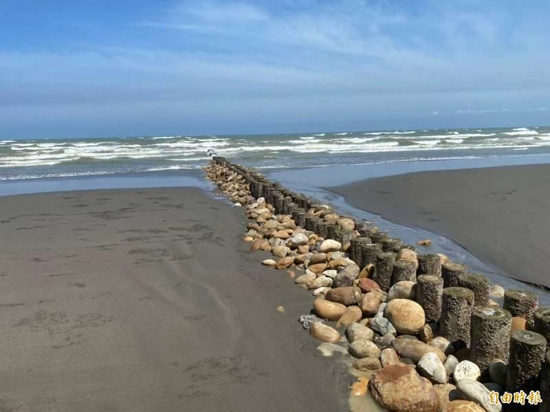 新竹縣重建的新豐鄉海岸線,利用木樁突堤消阻海浪的掏砂能量以護岸。(記者黃美珠攝)