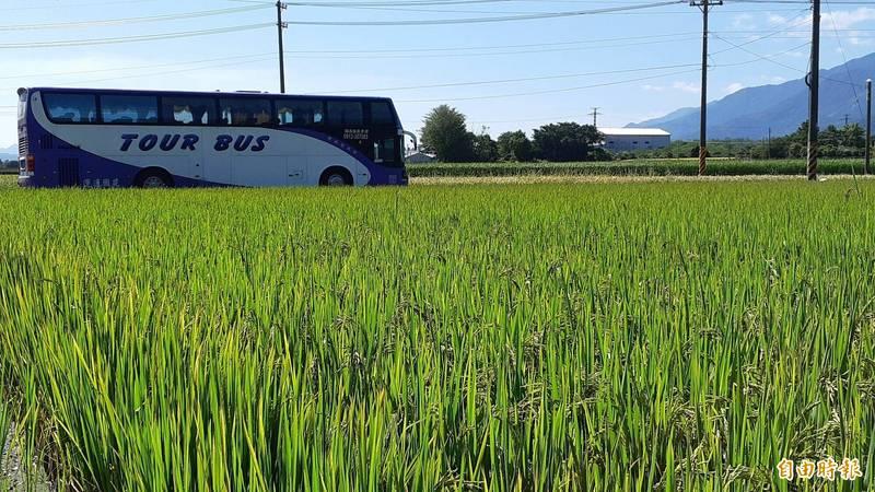 台東縣府以疫後振興經濟名義,將花4200萬招待2萬4千名縣民縣內一日遊。(記者黃明堂攝)