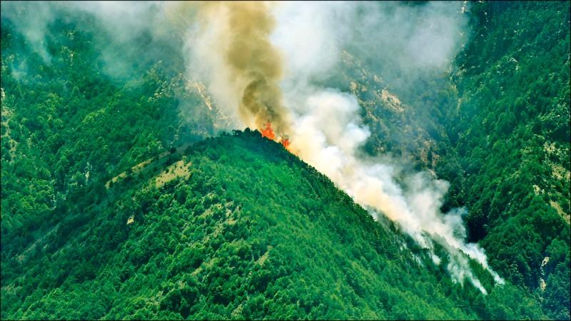 玉山國家公園今年5月遭山友鋸樹生火引發山林大火。(記者劉濱銓翻攝)