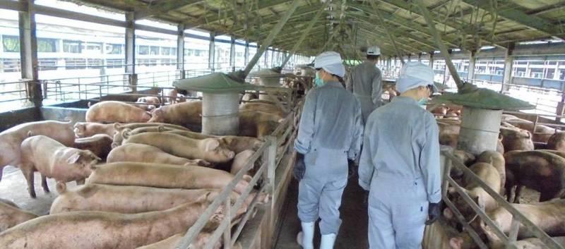 為了防堵非洲豬瘟,農委會展開全國養豬場清查。(防檢局提供)