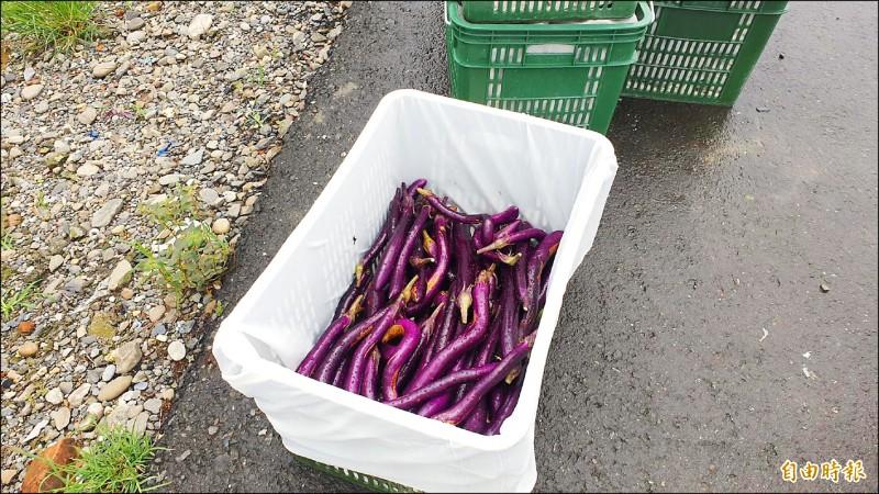 茄子因為復耕速度較慢,價格仍在高檔(記者葉永騫攝)