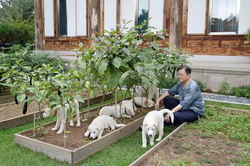 南韓總統文在寅昨日於社群平台宣布,已為「和平禮物」母犬小熊(Komi)與公犬松江(Song Kang)產下的7隻幼犬完成命名。(圖擷取自文在寅臉書「문재인」)