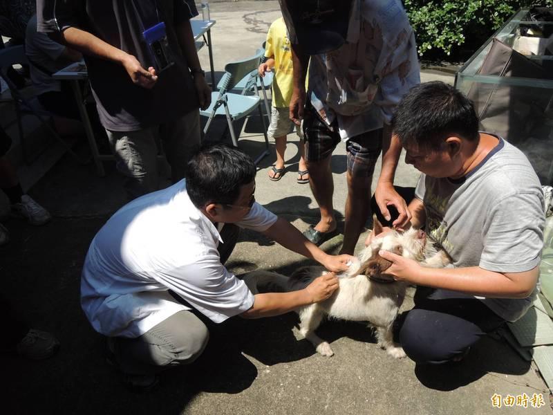雲林縣9月在虎尾等8鄉鎮進行13場免費狂犬病疫苗施打。(記者詹士弘攝)