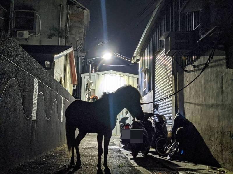 一名北市網友深夜返家竟在家門口撞見一匹馬,引來大批鄉民圍觀推爆。(圖擷自PTT)