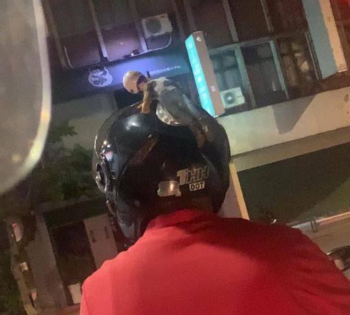 女網友的老公開車驚見騎士頭上「有人」,但她抬頭一看秒無語。(圖擷取自「爆怨公社」)
