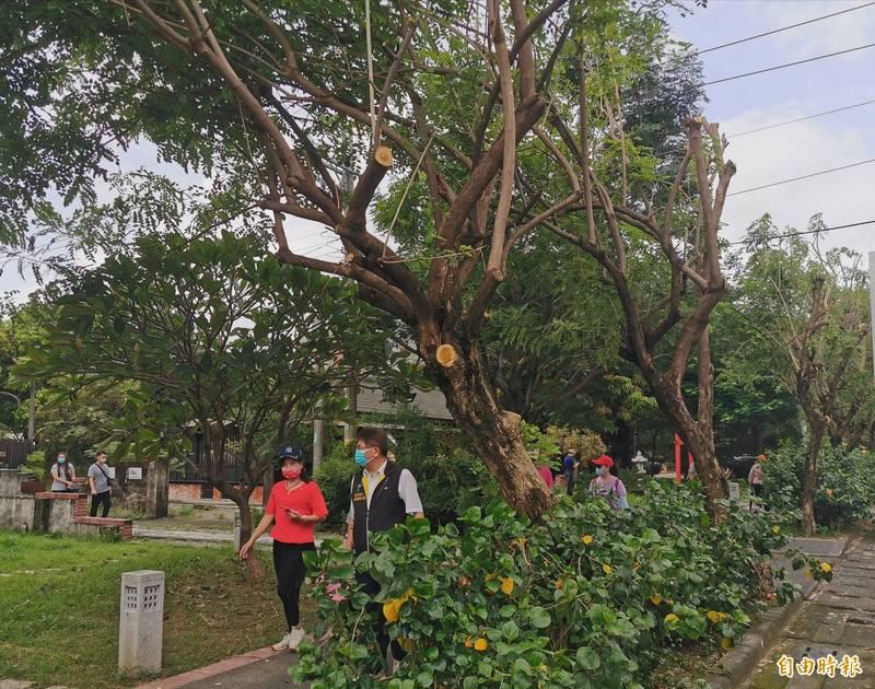大目降文化園區的修樹工程,引來批評。(記者吳俊鋒攝)