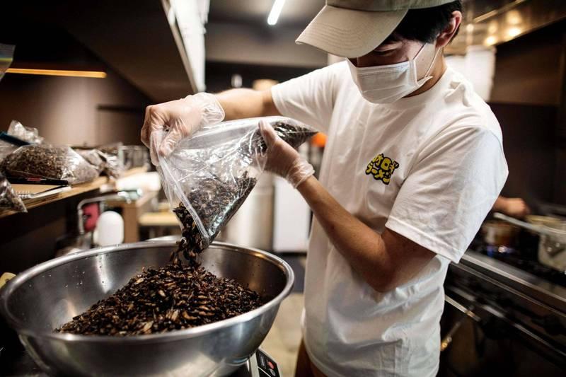 日本近年來不斷有人嘗試食用昆蟲,圖為東京一家打算以昆蟲為主食的餐廳,廚師正在料理乾蚱蜢。(法新社資料照)