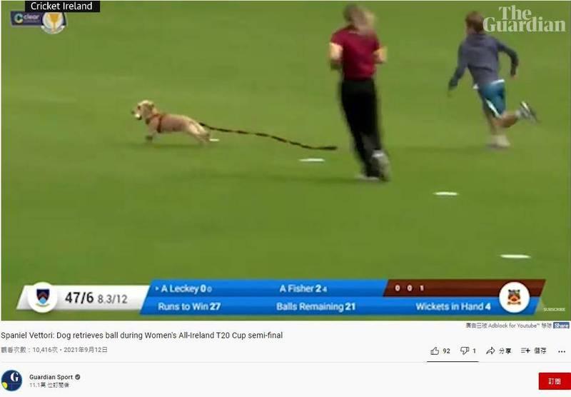 愛爾蘭1隻狗狗突然闖入板球比賽,叼走板球後狂奔。(圖擷取自Youtube_Guardian Sport)