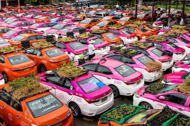 疫情重創泰國出租車業,有業者突發奇想,將車頂變身成苗圃,種一些收成期短的蔬菜,提供給失業司機們貼補家用。(法新社)