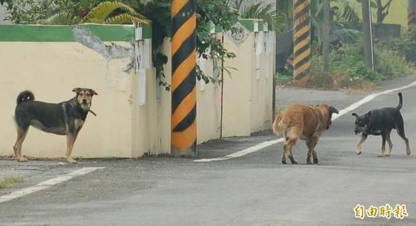 張姓男子讓自家的狗自己到家門口尿尿,不幸被車撞死,法官認為過失責任是飼主不在肇事駕駛。示意圖。(資料照)