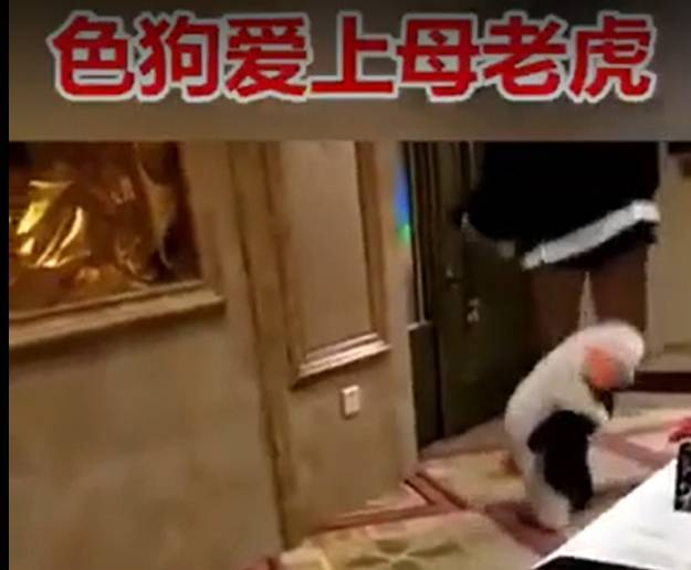 蔡姓老翁被控傳性愛影片約炮女網友,他辯稱是女方先傳「色狗愛上母老虎」暗示他可以進一步。(翻攝Youtube)
