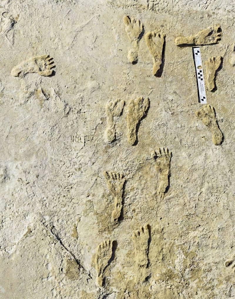 被認定北美最古老的人類腳印,約2.3萬年前。(美聯)