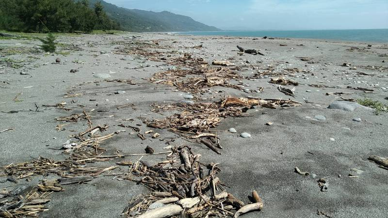 台東林區管理處今日起至10月27日止公告分2階段,開放海岸保安林可自由撿拾漂流木。 (台東林管處提供)