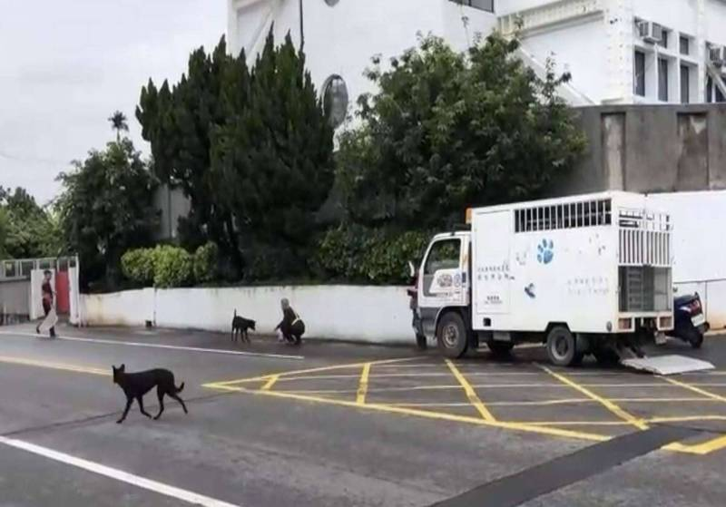彰化市公所從源頭逐年減少流浪狗數量,讓「毛小孩」不會流浪街頭,期待大家共同目標透過源頭控管減量解決流浪犬貓問題。(圖由資料照)