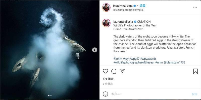 巴列斯塔在太平洋的法卡拉瓦環礁捕捉到這張名為「創造」(Creation)的瞬間,奪下今年野生動物攝影師大賽首獎。(圖擷取自Instagram/@laurentballesta)