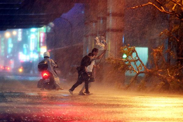 小鋼砲杜鵑颱風襲台