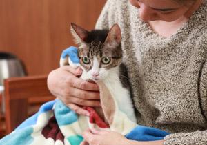老貓照護 5大重點