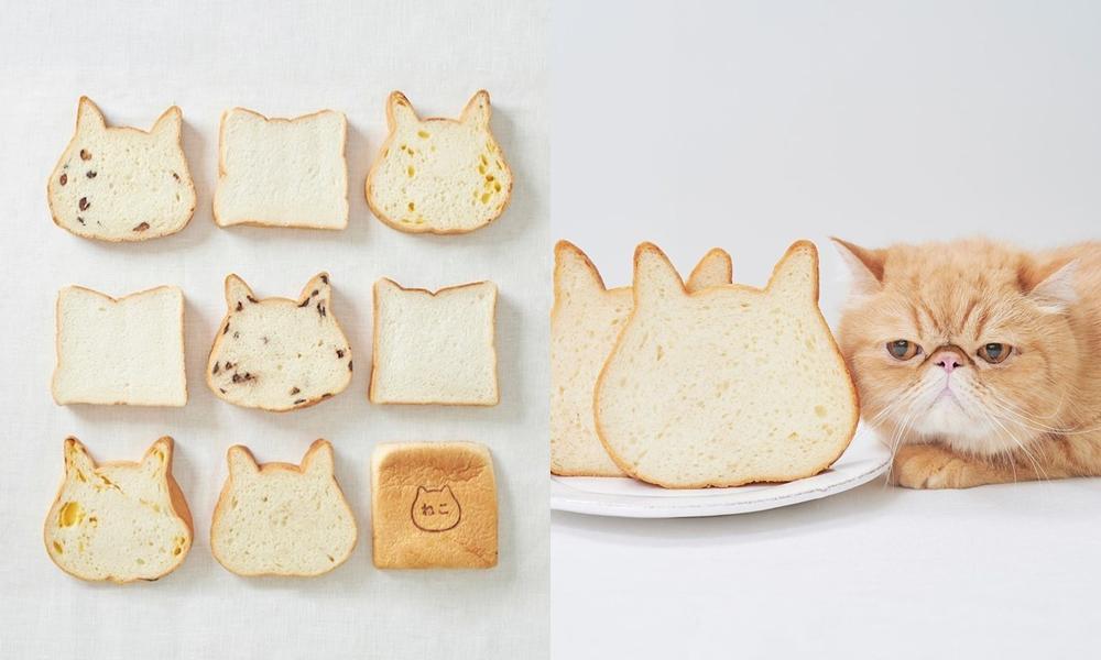 日本夯爆「貓咪生吐司」來台快閃!肉球瑪德蓮、起司蛋糕...貓奴準備開吃