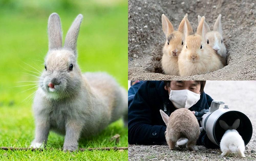 解封啦!日攝影師記錄兔島珍貴畫面「整窩兔兔出洞瞬間」療癒網友