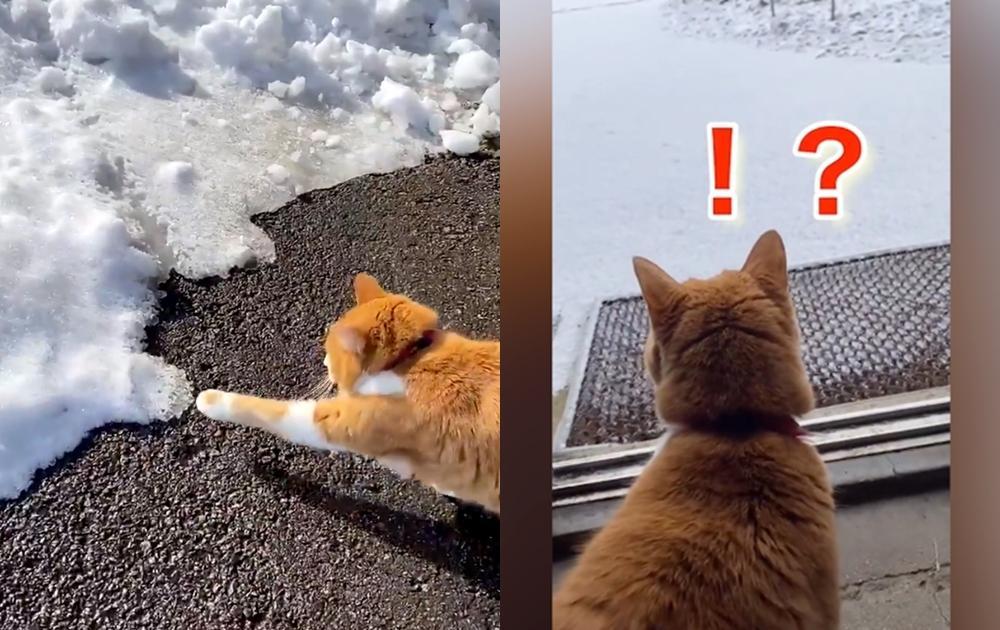 天氣好冷但是想碰雪!怕冷橘貓伸出「顫抖貓掌」好奇跨出第一步