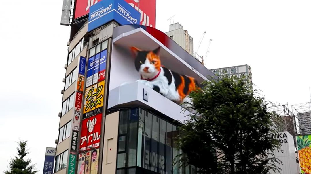 巨大三花貓現身新宿街頭!超逼真裸視3D還原超萌睡相、還能與路人互動