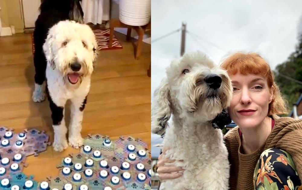 「帶我去散步!」狗狗用按鈕跟主人對話 網友驚:英文比我還好