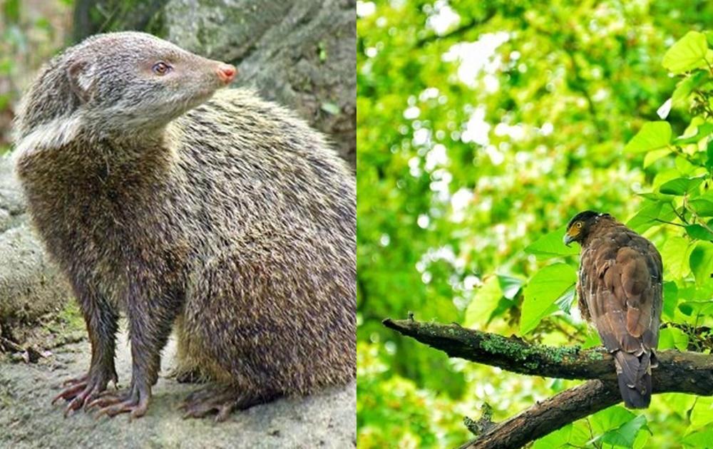 少了遊客,這些景點出現「超稀有野生動物」!網嘆:疫情唯一優點