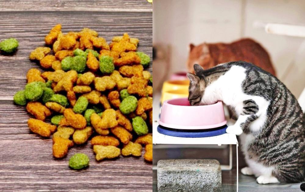 彩色飼料增加貓咪食慾?獸醫師揭露「這一點」曝:真的沒必要