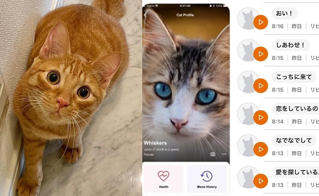 貓皇喵喵叫是想說什麼呢?他用「貓語翻譯APP」實測結果超融化!