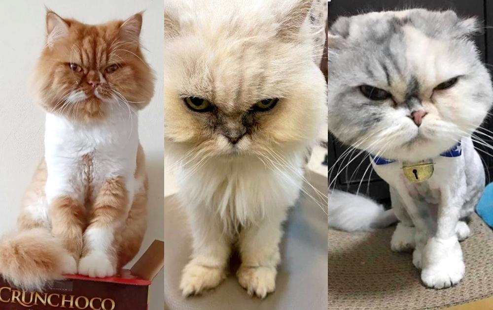 我很生氣!新一代「臭臉貓」大集合   網友被瞪到狂喊:超療癒!