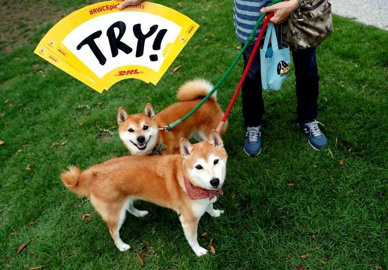 疫情讓毛孩也壓力大!日本民調:逾 5 成飼主指狗狗出現「這行為」