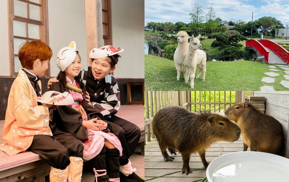 宜蘭綠舞升級「動物飯店」!水豚、羊駝、狐獴零距離餵食討拍超療癒