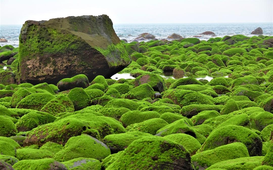 新北最新「抹茶海岸」成攝影玩家私房秘境!打卡老梅綠石槽不怕路人入鏡