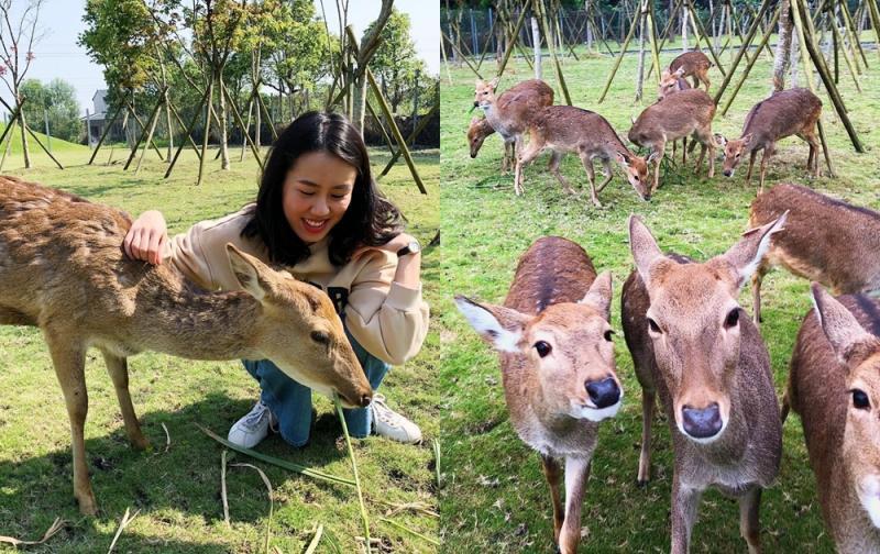來跟小鹿玩!宜蘭、墾丁「隱藏版小奈良」全新景點超療癒
