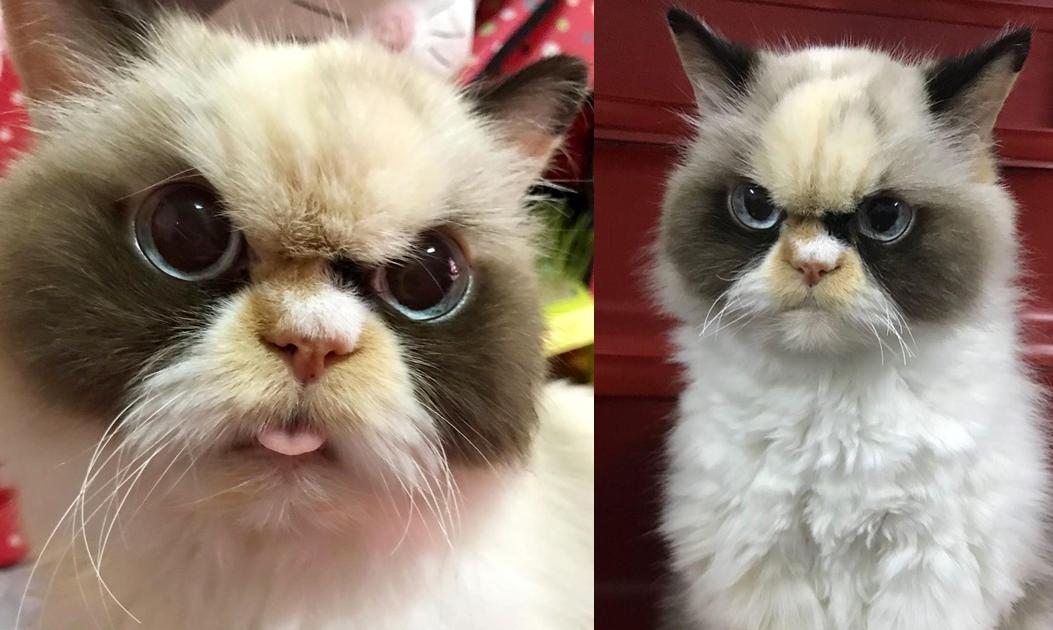 愛貓罹患在台「不治之症」!飼主豁出去遠赴美就醫  霸氣宣告:牠是我家人