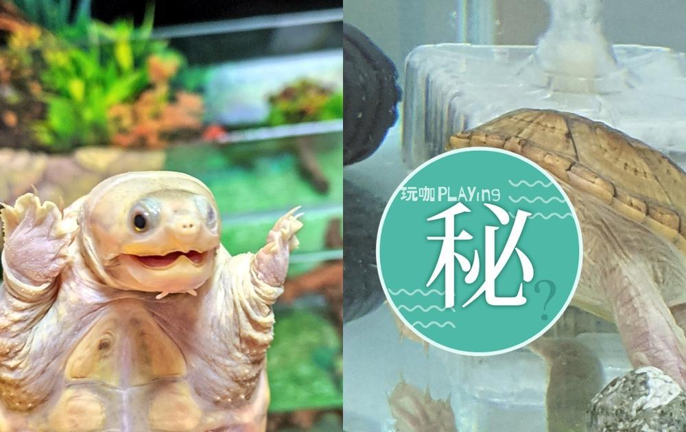 烏龜嚇到「下巴掉下來」!超浮誇表情讓65萬人驚呼:他到底看到了什麼?