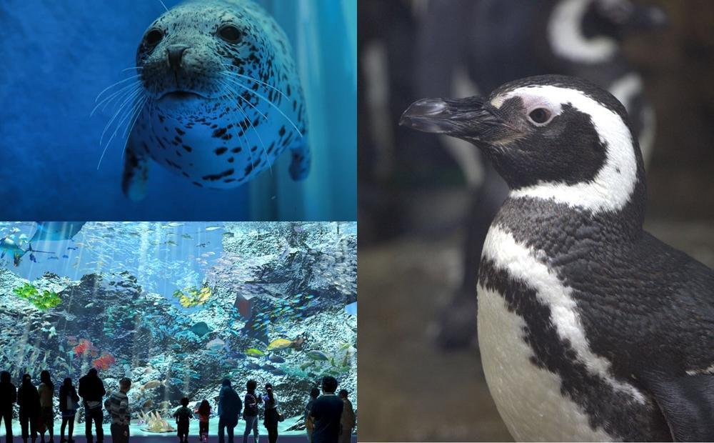 桃園最美水族館「Xpark」門票開放預購!麥哲倫企鵝首度登台陪你喝咖啡