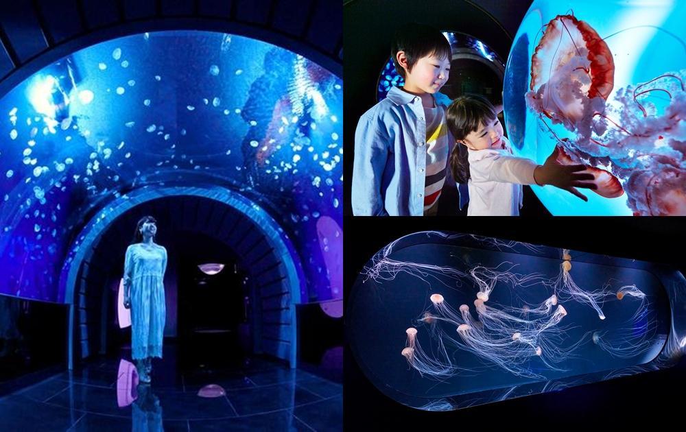 不只桃園水族館話題夯!東京最新「水母主題展館」日本最大全景水箱超震撼