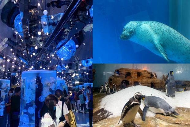 桃園「Xpark水族館」開幕前搶先直擊!企鵝咖啡館、6000隻魚群表演超震撼
