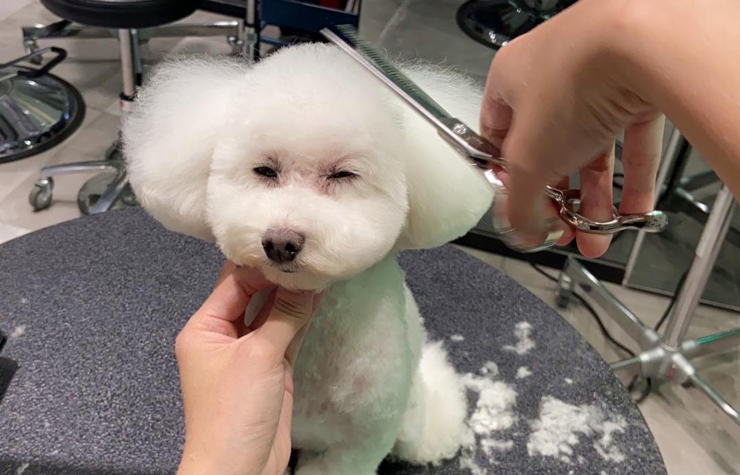 咬到濺血噴肉屑!寵物美容師:最累的不是被咬而是...