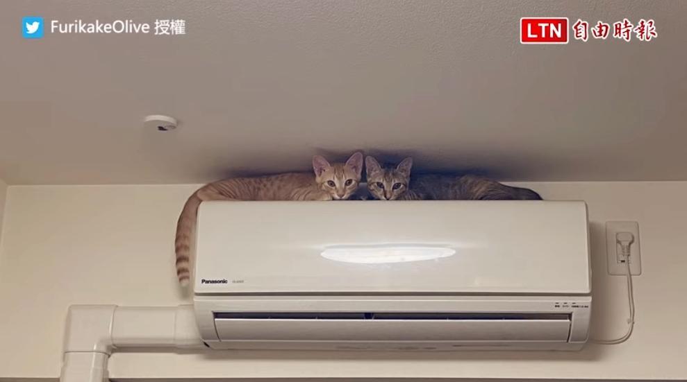 「這麼高你們怎麼爬的?」冷氣機竟變貓跳台...飼主超崩潰