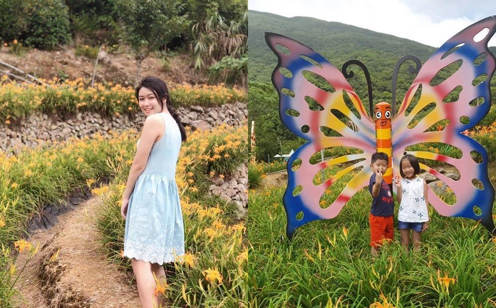 陽明山1400坪「金針花秘境」賞景正是時候!滿山金黃花海不輸花東