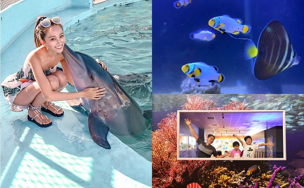Xpark掀起追魚熱!3個網友好評的「親子水族館」避開人潮看水母餵鯊魚