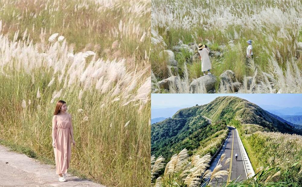 秋季限定銀白色花海!全台6處「芒草、甜根子草秘境」盛開媲美九月雪