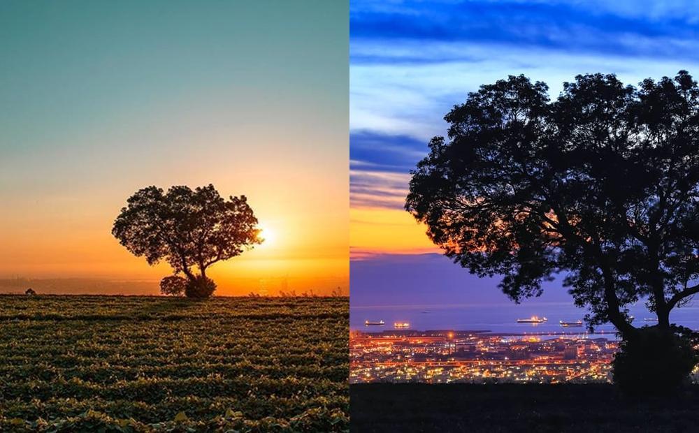 夕陽版「金城武樹」俯瞰台中百萬夜景!絕美空靈構圖讓IG打卡討論度大爆發