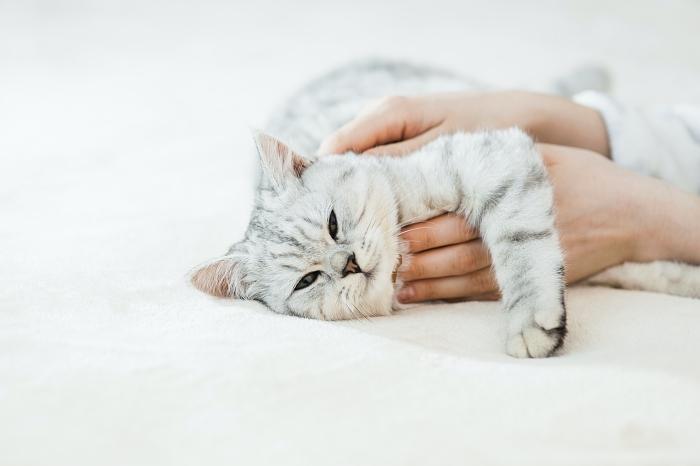 單身不能領養貓?日本 8 個超嚴苛認養條件「養寵物」還要準備財力證明