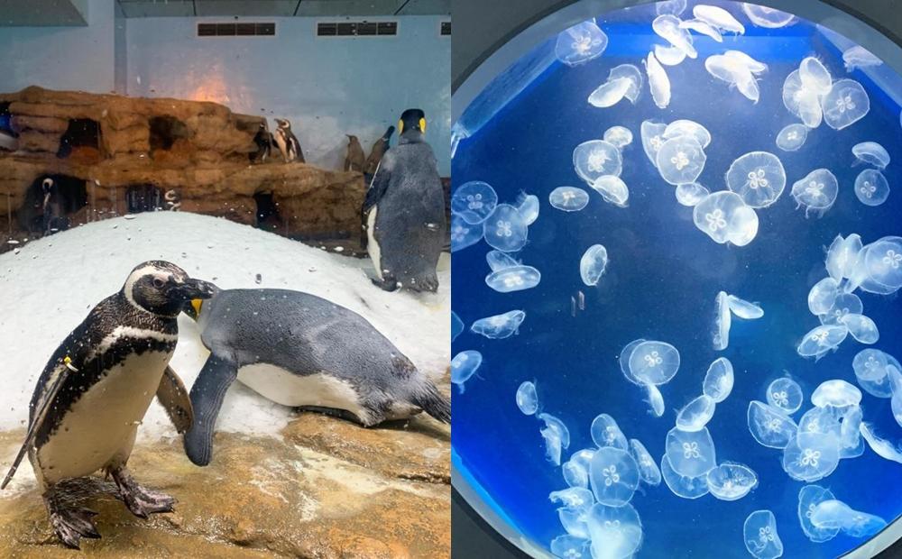 桃園Xpark遭批「水母斷肢、企鵝受傷」!官方回應:不實指控將採法律途徑